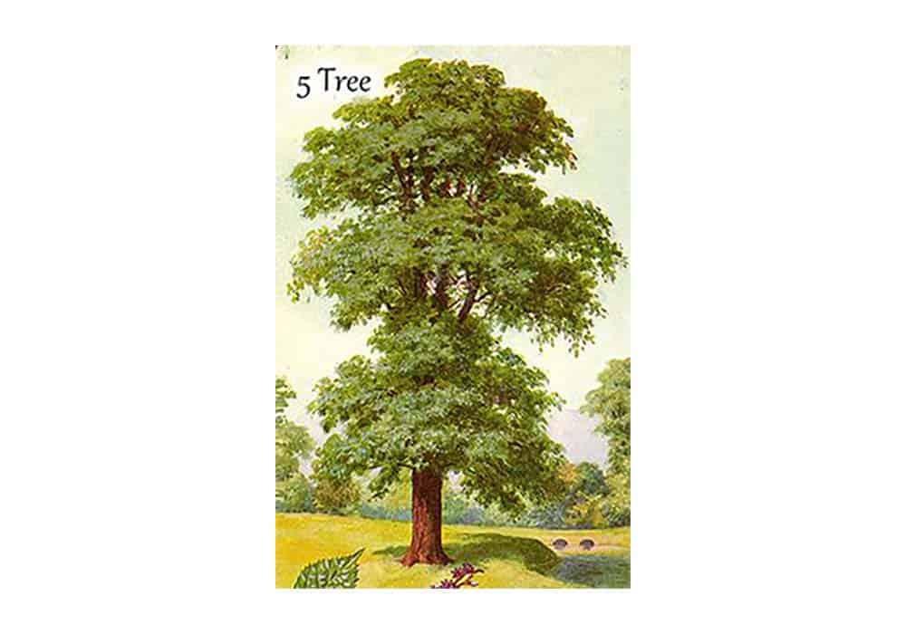 tajne-tarota-lenormand-stablo