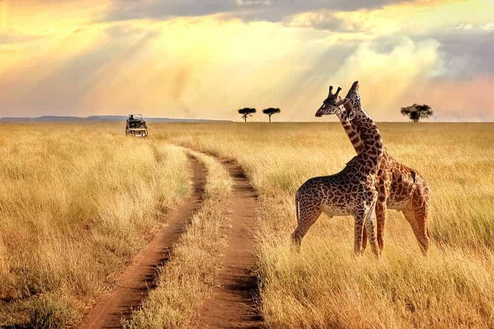 Plenković o Africi